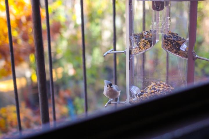 Notes from the Feeder: A Brooklyn Bird HotSpot
