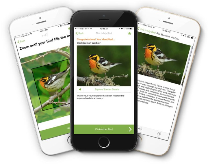 Nature Apps – Merlin Bird Identifier