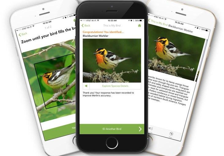 Nature Apps – Merlin BirdIdentifier