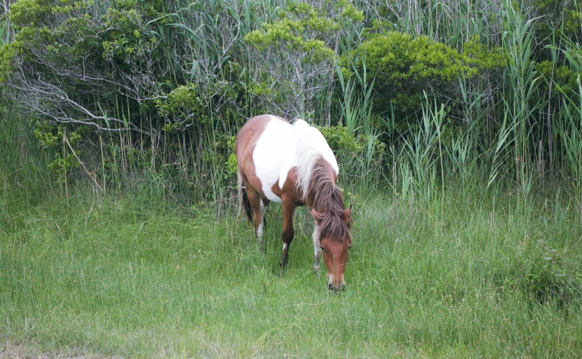 Adventures on Assateague Island